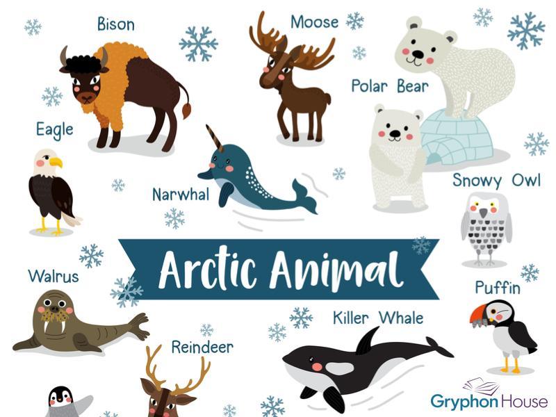 Arctic main